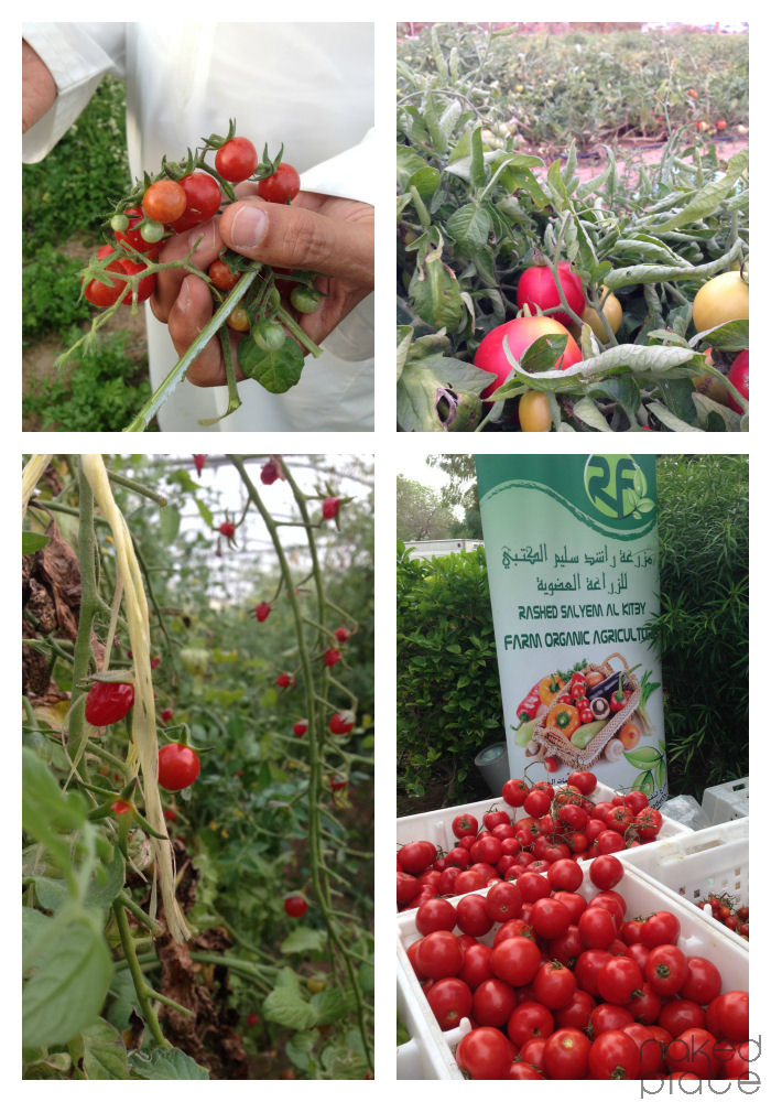From UAE AlKitbyFarm to Farmers market Dubai
