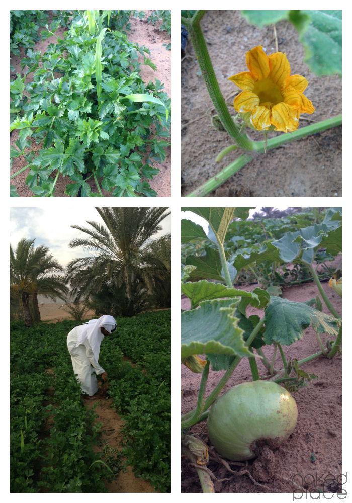 AlKitbyFarm_UAE
