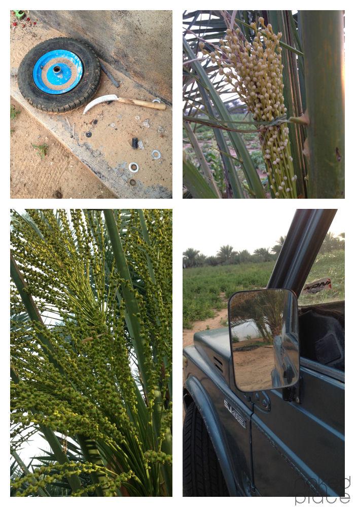 Al Kitby UAE Organic Farm_visit