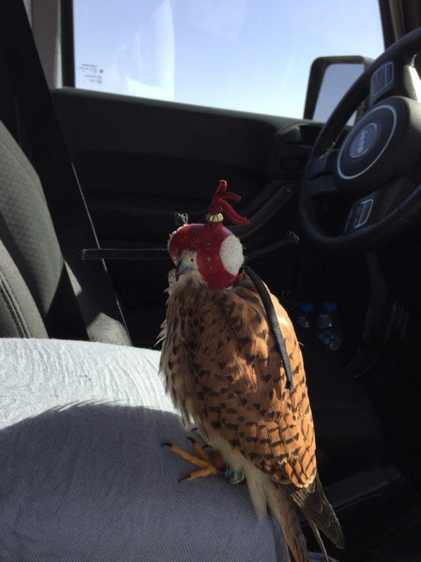 Mr Kush-hawk at Unseen Trails Dubai