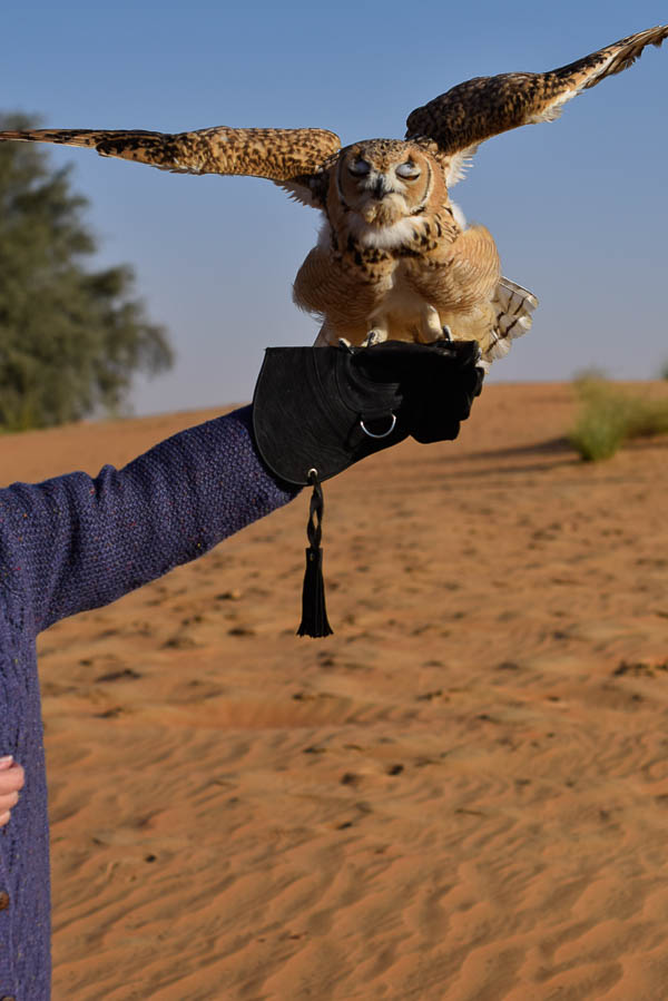 Unseen Trails Dubai Desert Desert Eagle Owl named XBox