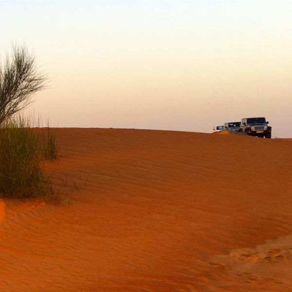 Experience Unseen Trails of Dubai - Dubai Desert Conservation Reserve safari
